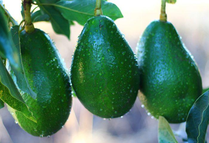 Nutrientes e benefícios do abacate